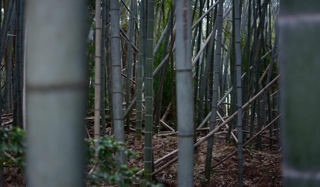 放置された竹林の様子